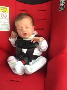 """2 weeks old, 7.5lbs, 20.5"""" long this wee one is already on the second-lowest harness slot!"""