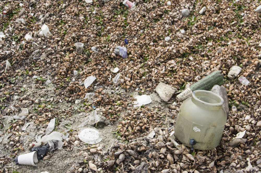 El alga de agua dulce cubre gran parte de la superficie del Río Lerma. Esta misma alga absorbe gran parte del agua del río.