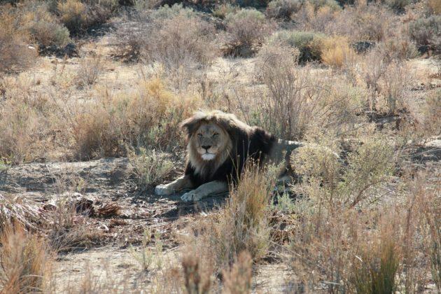 roteiro de 7 dias de viagem pela África do Sul 17