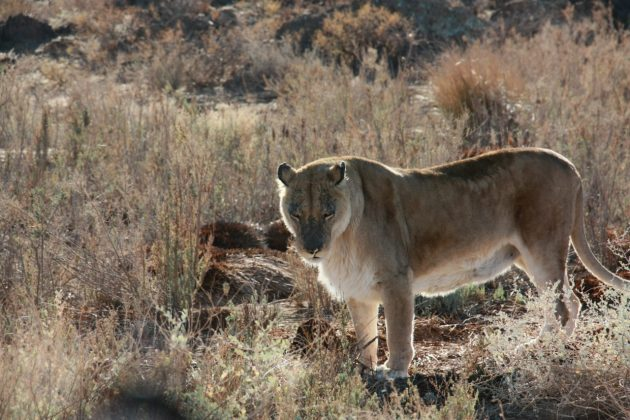 Safari próximo da Cidade do Cabo 19