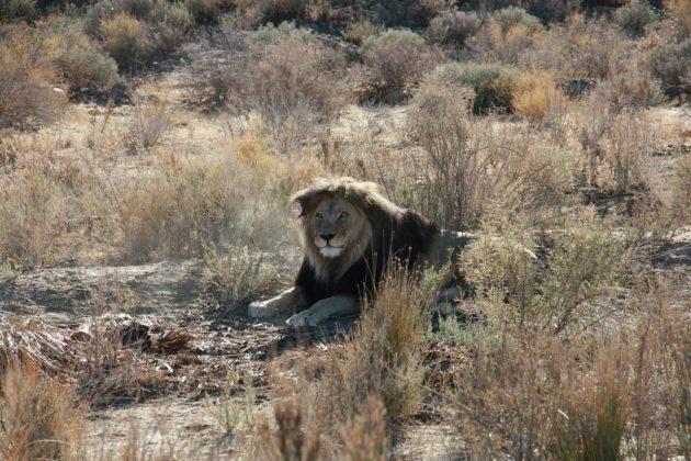 Safari próximo da Cidade do Cabo 18