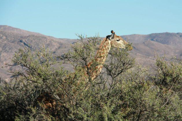 África do Sul dicas e informações 7