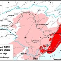 amur tiger range
