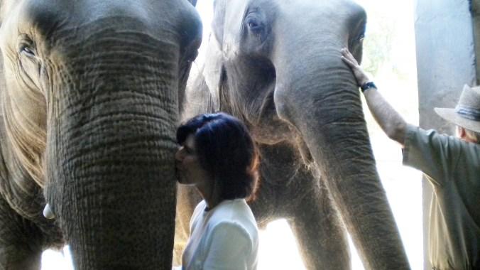 vicki-elephant kiss