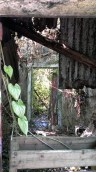 Day 4: Abandoned Hut in Tung Ping Chau