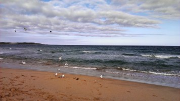 Cronulla Beach: Seagulls Feeding