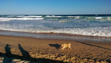 Cronulla Beach: Happy Dogs