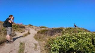 Coast Track Wild Life: Richard vs Bird