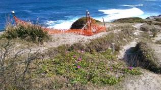 Coast Track: Purple Flowers