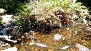 Blackheath Weekend Day 2: Freshwater Stream