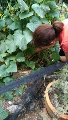 In the Garden: Harvestable Found