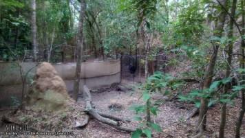 Hartley's Crocodile Adventures, June 2015: Cassowary