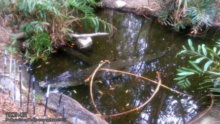 Hartley's Crocodile Adventures, June 2015: Crocodile