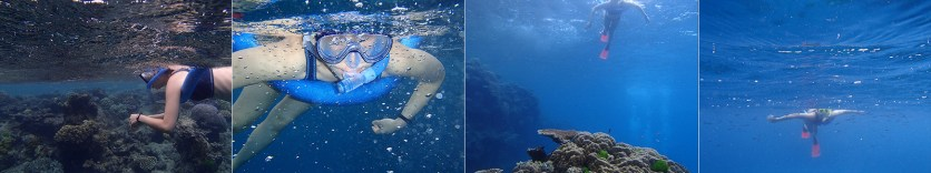 Great Barrier Reef Cairns, June 2015: Snorkelling