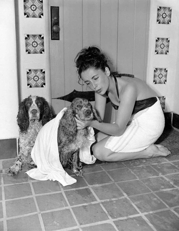Drying off the dogs - Elizabeth Taylor