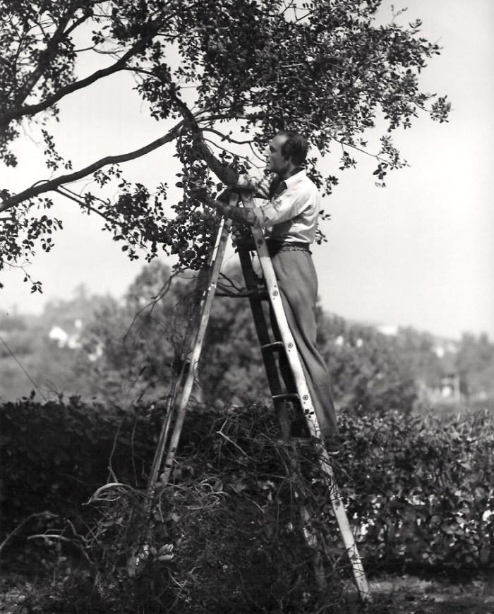Basil Rathbone pruning garden