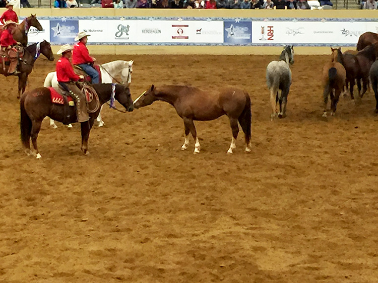 Photo of Remuda and cowboys at Road to the Horse