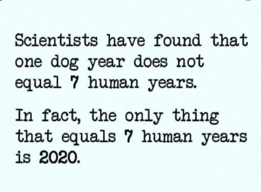 https://www.pinterest.com/kimbuehler1/pandemic-humor-the-best-memes-from-covid19-2020/ Positive Covid-19 Test Result