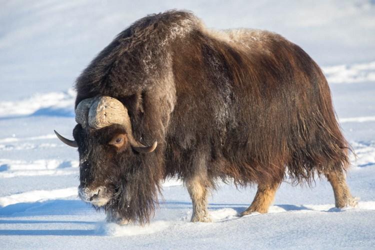 Alaska Wildlife Conservative Center- Alone