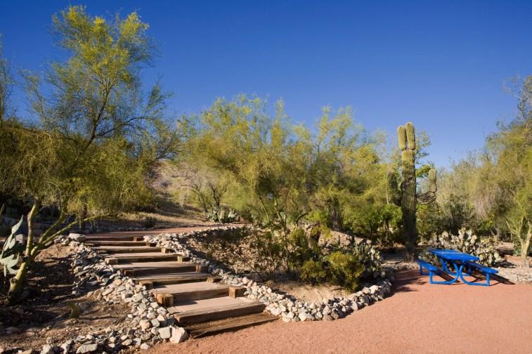 Arroyo-Camino Cactus Garden