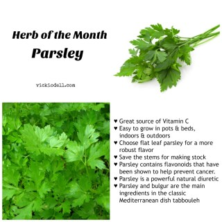 Herb of the Month – Parsley