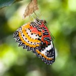 Midlife Freedom – This Butterfly Has Emerged Dammit!