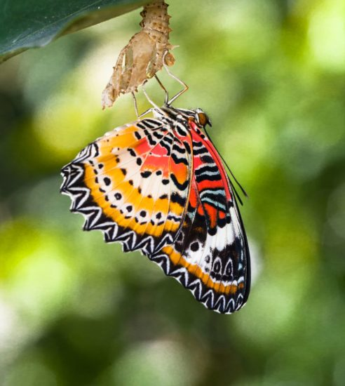 This Butterfly Has Emerged Dammit!