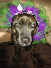 Tess using her halloween tutu round her head!