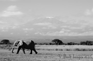 Visions of Amboseli