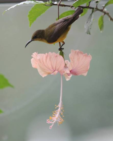 The sunbird that visited us everyday and we felt was Louise's spirit
