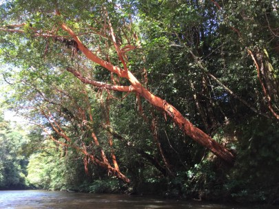 red barked trees line the river