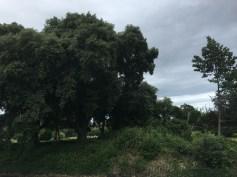 Phoenix Park