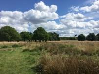 Richmond Park is an open field