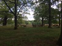 A group of deer
