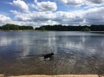 A dog is having fun in the water