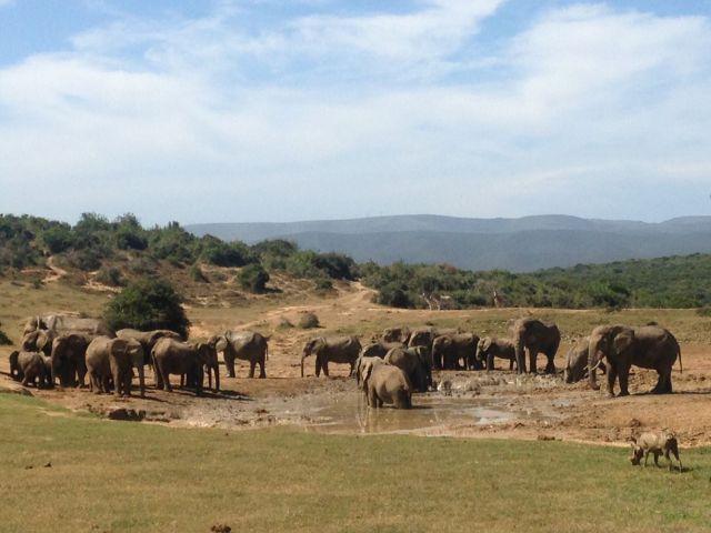 Elefanten an der Wasserstelle
