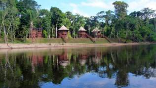 jungle-in-suriname-165