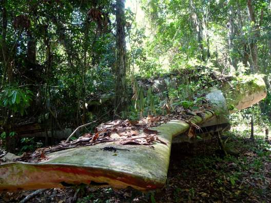 jungle-in-suriname-31