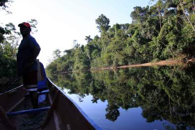 jungle-in-suriname-58