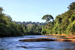 jungle-in-suriname-74
