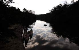 jungle-in-suriname-81