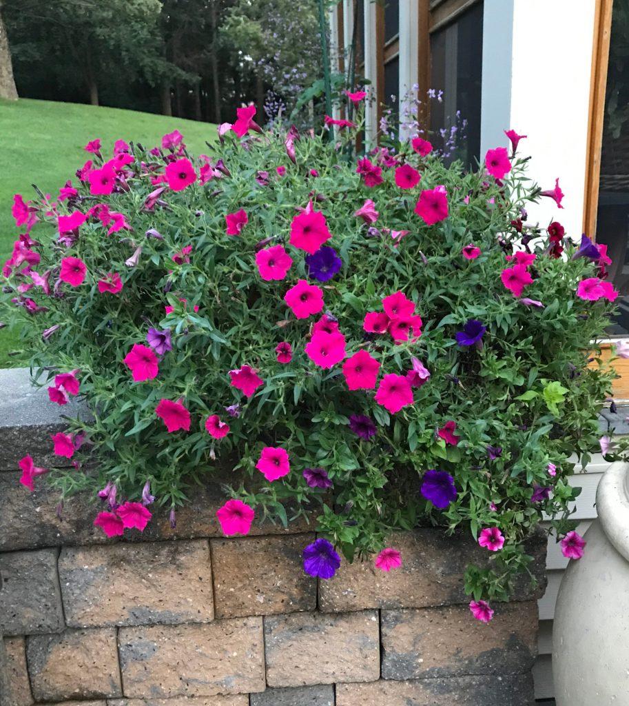 Our flowerpot fundraiser
