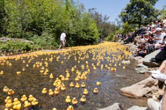 silicon_valley_duck_race_3-30-14-1 The 4th Annual Silicon Valley Rubber Duck Race in Vasona Lake Park on June 12, 2011, in Los Gatos, California.