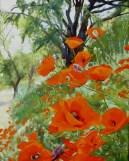 Poppies Madrid Sur, Spain 2006