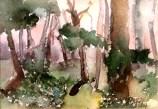 Cantalojas Forest 1997