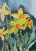 Narcissus 1994
