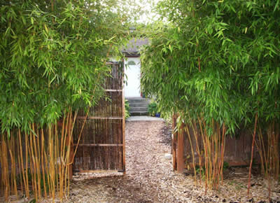 bamboo and landscaping victoria