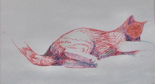 Soft Paw Cat,