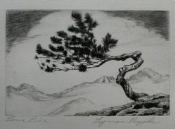 Lone Pine by Lyman Byxbe