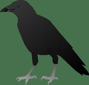 crow writer